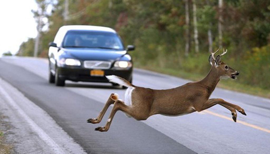 animal-en-carretera-pequeña